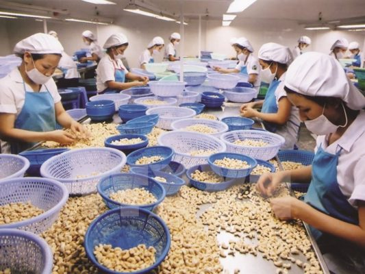 Cashew nut prices on revival path