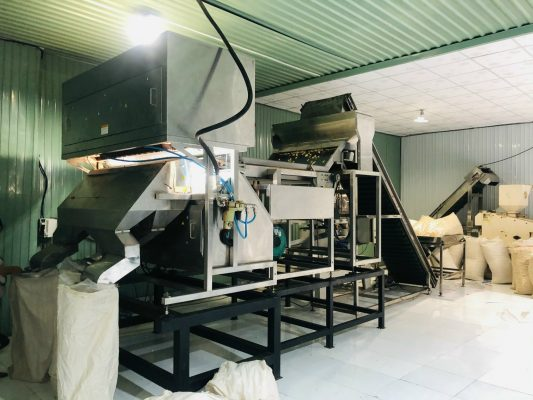Colour and size sorting machine